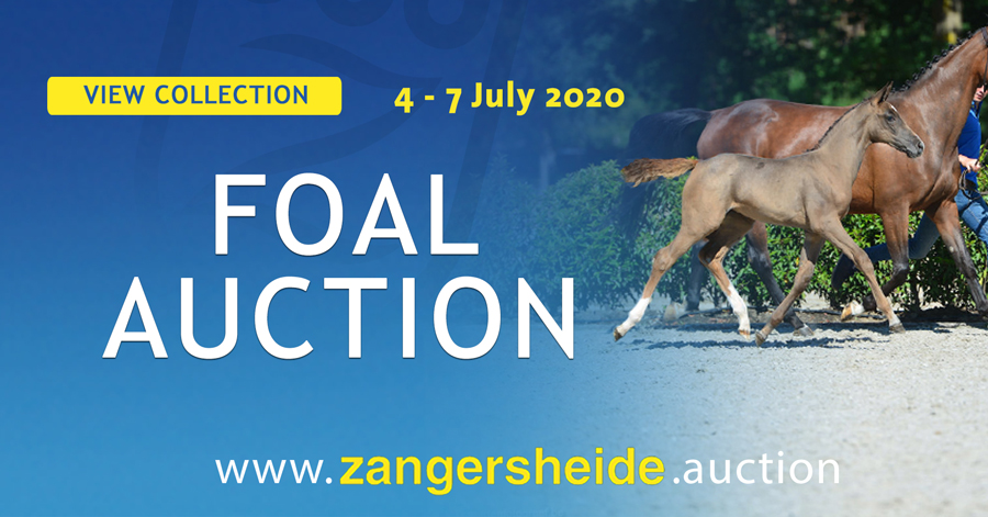 Zangersheide.auction